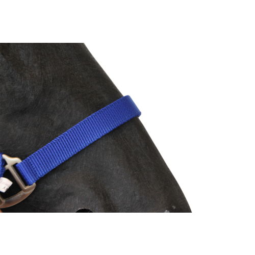 Halster Classic blauw foal