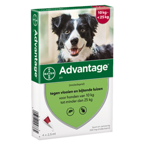 Bayer Advantage hond 250 - 4 pip