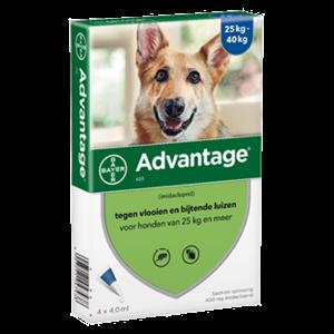 Bayer Advantage hond 400 - 4 pip