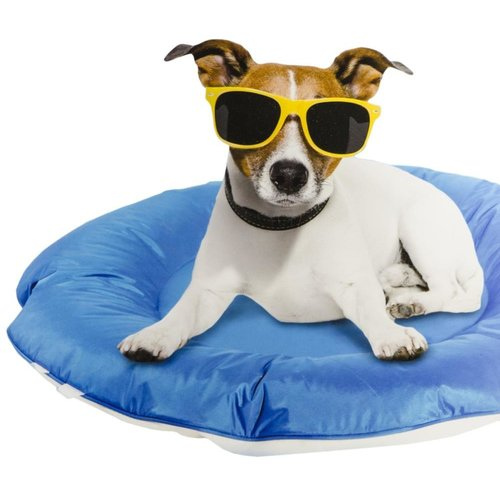 All for paws AFP AFP Chill Out Floating Bed