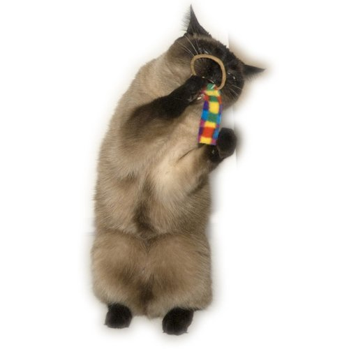 Cat Dancer Cat Dancer Ring Tail Chasers 2-Pack