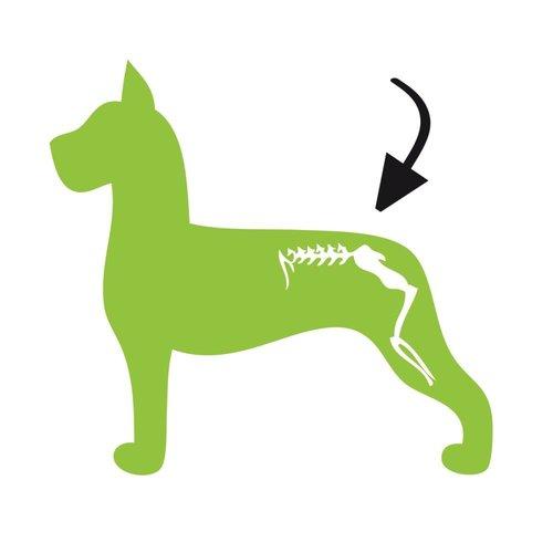Holland Animal Care Dog Flex