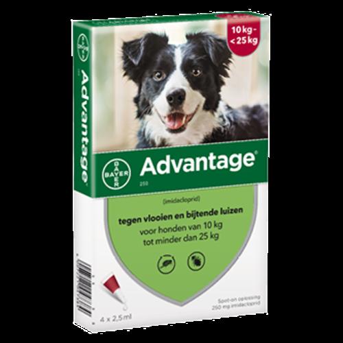 Bayer Advantage 250 hond (10 - 25 kg) - 4 pip