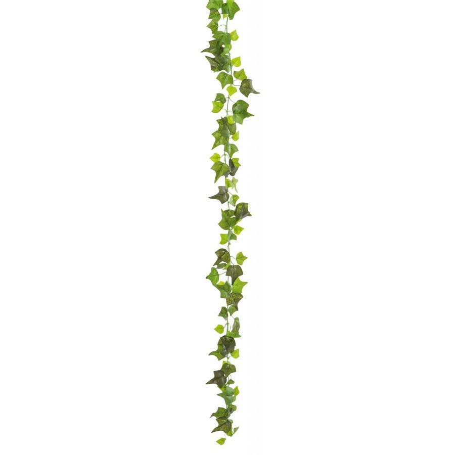 Klimop (1,9 meter)-1