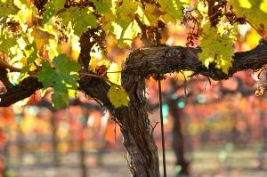 Drie voordelen van biologische wijn