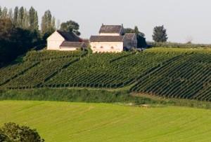 Nederland als wijnland