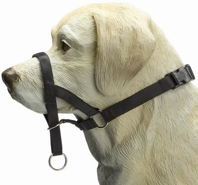 IPTS Dog control Nylon Zwart 24 cm