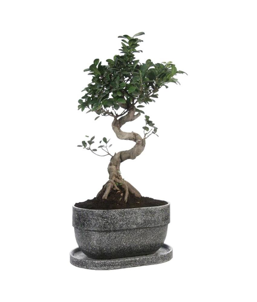 Bonsai urn - graniet