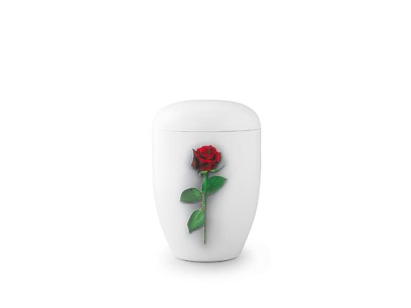 Eco urn wit met rode roos - bio