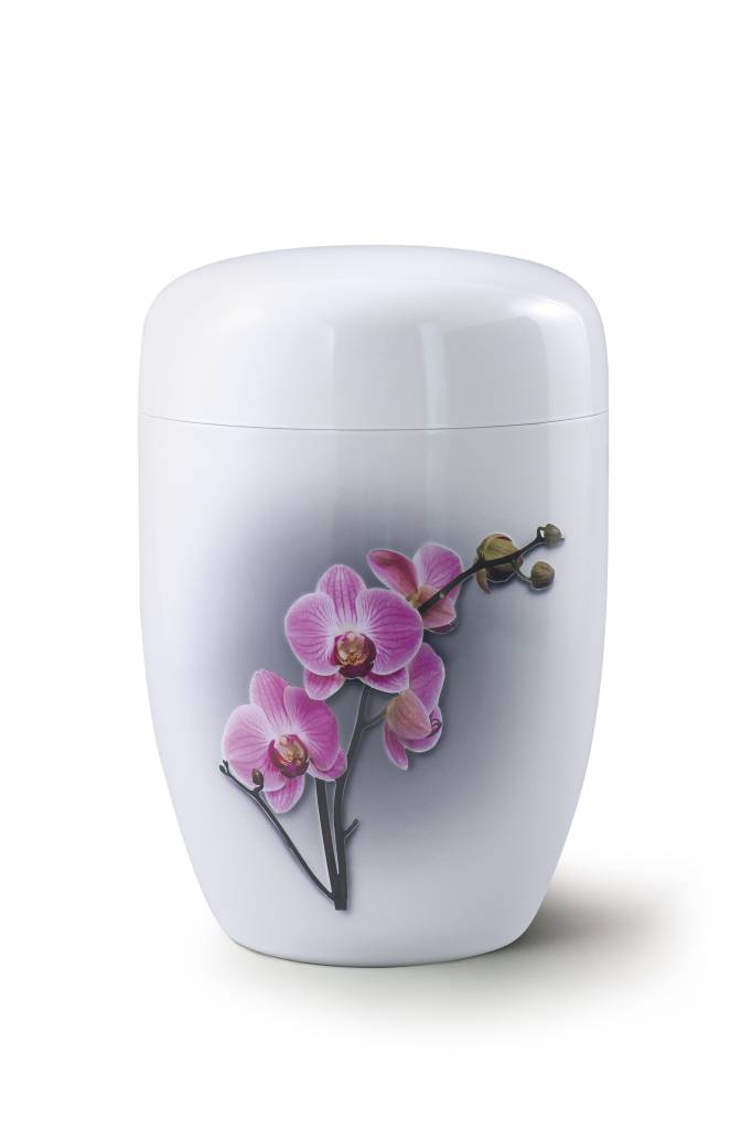 Orchidee wit - staal