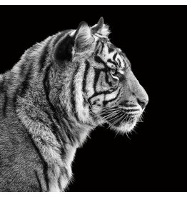 Eliassen Foto Malerei 80x80cm Tiger1