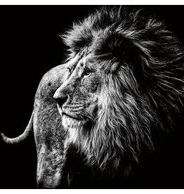 Eliassen Foto op glasschilderij Lion 100x100cm