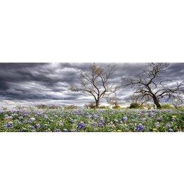 Eliassen Painting glass 60x160cm Fields