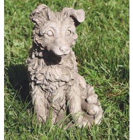 Garden image dog Sheltie