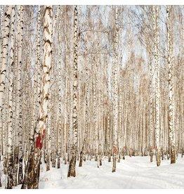 Glas schilderij 80x80cm Siberie