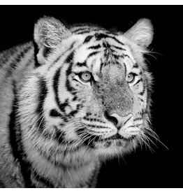 Glasmalerei 100x100cm Tiger beiseite