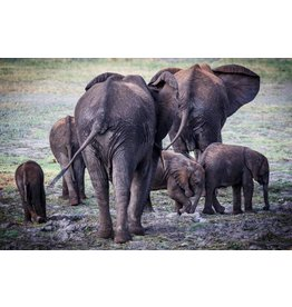 Plexiglass painting Elephants 80x120cm