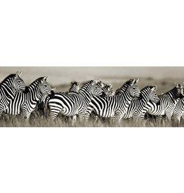 MondiArt Glasschilderij Groep zebra's 50x150cm