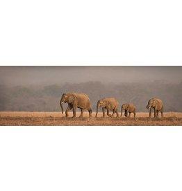 MondiArt Glasscchilderij rechthoekig Olifanten 50x150cm