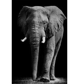 MondiArt Dibond painting Elephant large 80x120cm