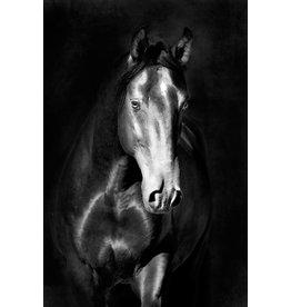 MondiArt Dibond schilderij Paard1  80x120cm