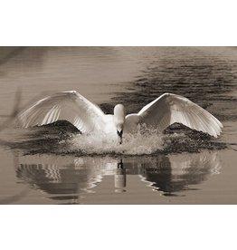 MondiArt Dibond Malerei Swan 180x120cm