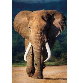 MondiArt Aluminiummalerei Alter Elefant 100x150cm