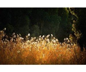 Wanddecoratie Met Licht : Dibond schilderij licht cm eliassen home garden pleasure