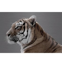 Dibond painting Tiger4 148x98cm