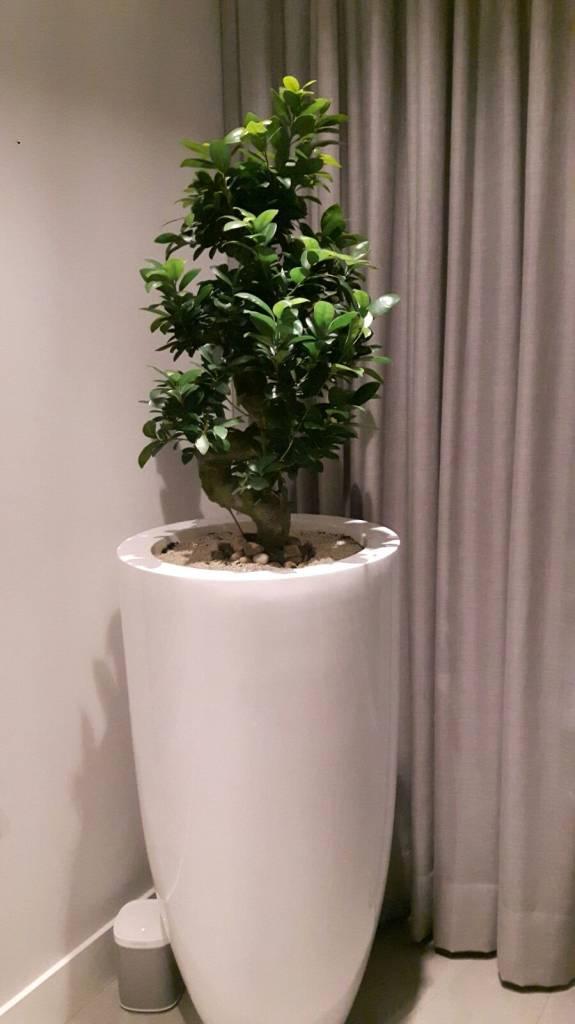 Eliassen Hohe Vase Tosk 90cm Hochglanz in 4 Farben