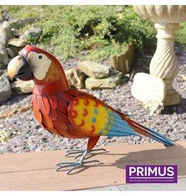Primus Abbildung Papagei rot