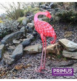 Primus Flamingo der Abbildung 3d, der rückwärts schaut