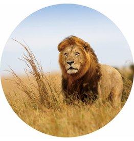 Gave Glas schilderij rond Leeuw dia 100cm