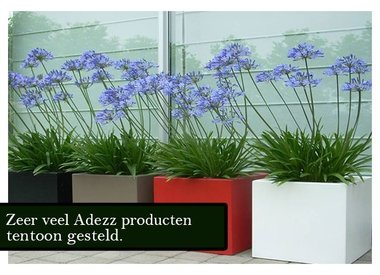 Adezz producten