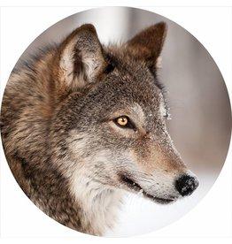 Gave Glass painting around Wolf diameter 80cm