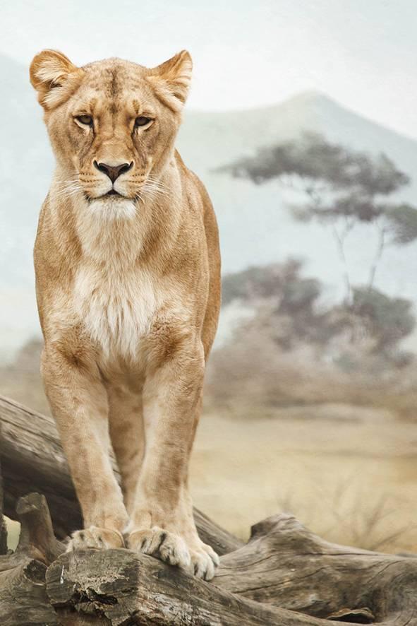 Wandkraft Wandkraft glasschilderij Afrika 148x98cm