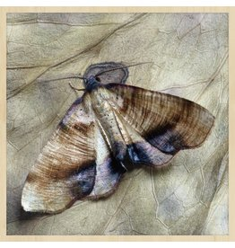 Wandkraft Painting forex moth 74x74cm