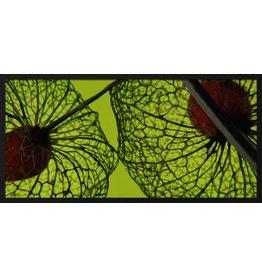 Wandkraft Malerei Forex Botanics 48x98cm