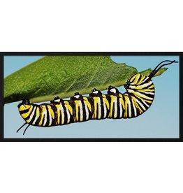 Wandkraft Malen forex Caterpillar 48x98cm