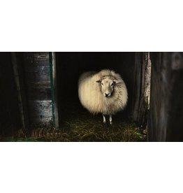Wandkraft Painting birch wood Sheep 98x48cm