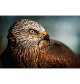 Wandkraft Anstrichglas Vogel 148x98cm