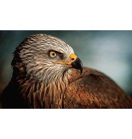 Wandkraft Anstrichglas Vogel 118x70cm