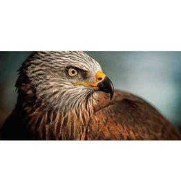 Wandkraft Anstrichglas Vogel 98x48cm