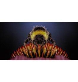 Wandkraft Painting dibond stainless steel Bumblebee 98x48cm