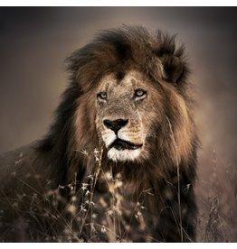 Eliassen Glass painting 100x100cm Lion 1