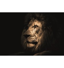 Ter Halle Glass painting 80x120 cm Lion dark