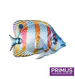 Metallorange-weißer Fisch