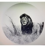 Gave Glass painting around Lion 100cm - Copy