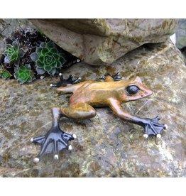 Eliassen Image bronze rainforest frog