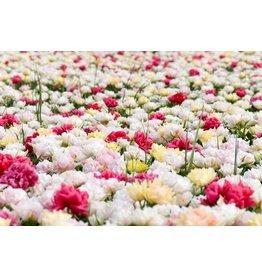 Eliassen Garden painting 60x90cm Tops